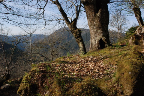 A casiña do bosque
