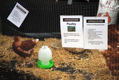 Vendendo galiñas cool