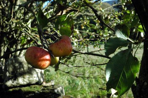 Mazás ao soliño do outono