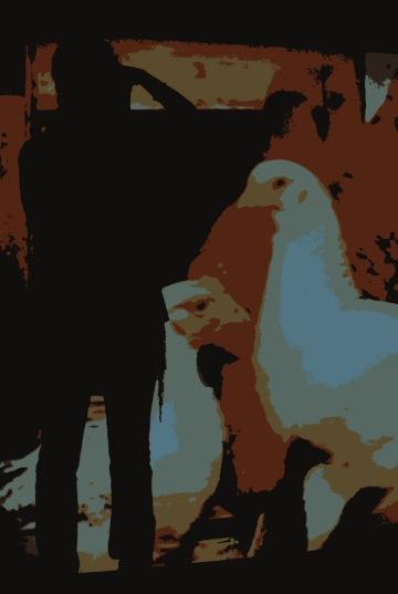 Entre galiñas