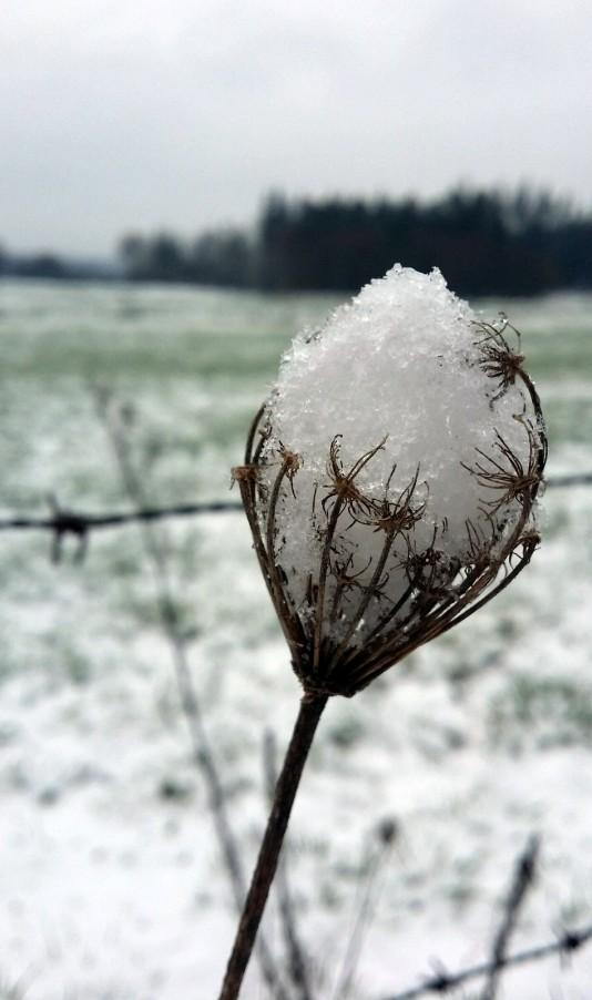 Neve en abrazo